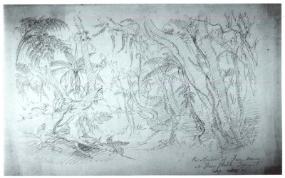 "Frederic Edwin Church, ""Scenery near Fern Walk, Jamaica,""  September 1865, graphite on light blue-green paper, 10 3/4 x 17 3/8 in., OL.1977.101 Collection Olana State Historic Site"