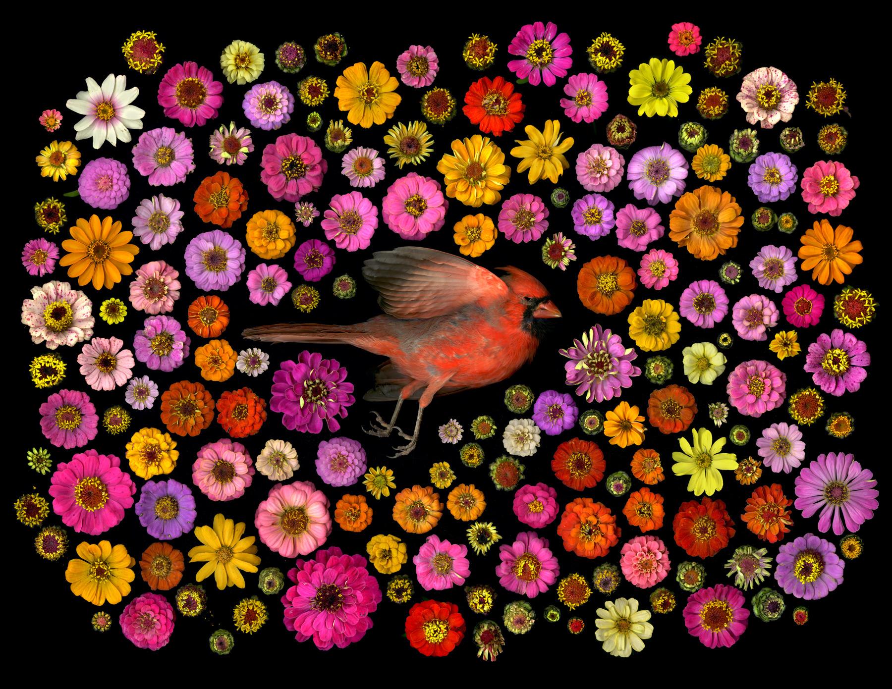 """Memento Mori Mandalas"" by Portia Munson"